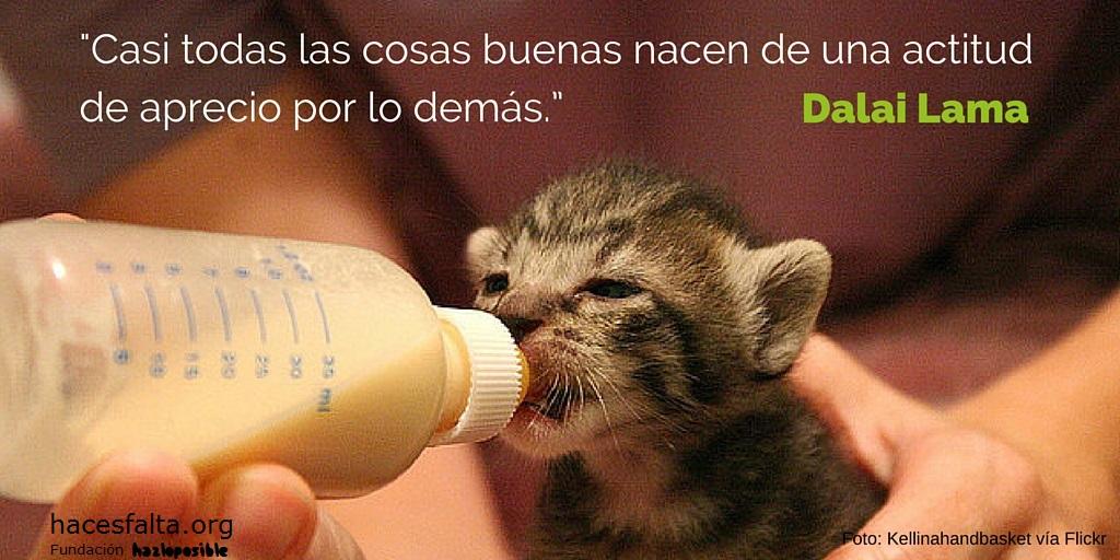 hacesfalta org: